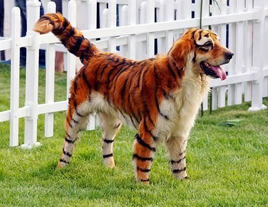 perro disfrazado del tigre tony