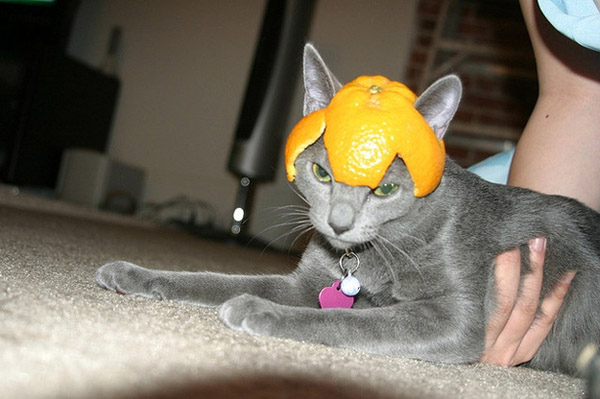 Funny cats wearing fruit helmets, funny cats, funny cat pictures, cat pictures, cute cats