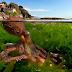 25 Foto-foto Pemandangan Bawah Laut Terbaik & Terindah
