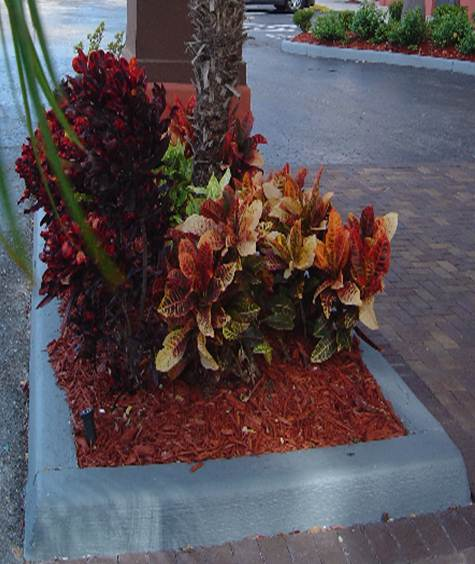 Vida a lo verde living in green plantas de croto color for Jardin 7 colores bernal