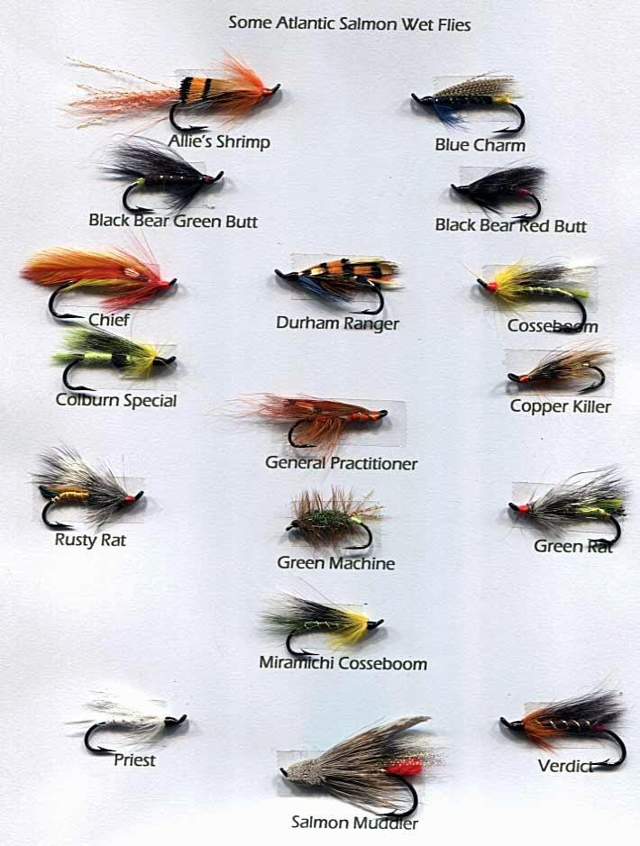 Fly fishing basic bigtacklebox for Trout fishing basics