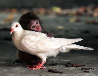 monky+dove.jpg
