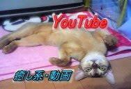 猫パンチ KO ↓