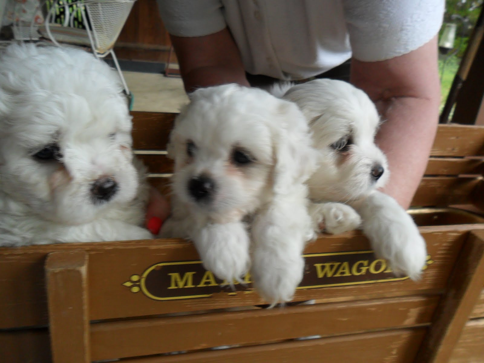 Cute puppies for sale adorable puppies for sale for Cute stuff for sale