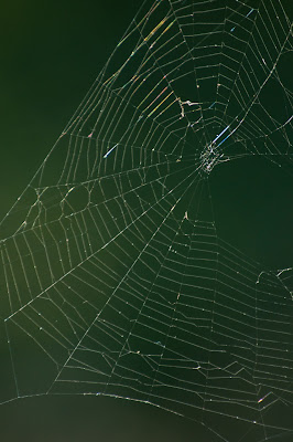 Spider Web, LLELA