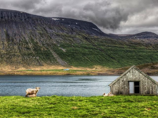 "<img src=""http://2.bp.blogspot.com/-IQ0aXuzrEes/UrAitunO7xI/AAAAAAAAF34/9em4VHmCpzg/s1600/gd4.jpeg"" alt=""Sheep Animal wallpapers"" />"