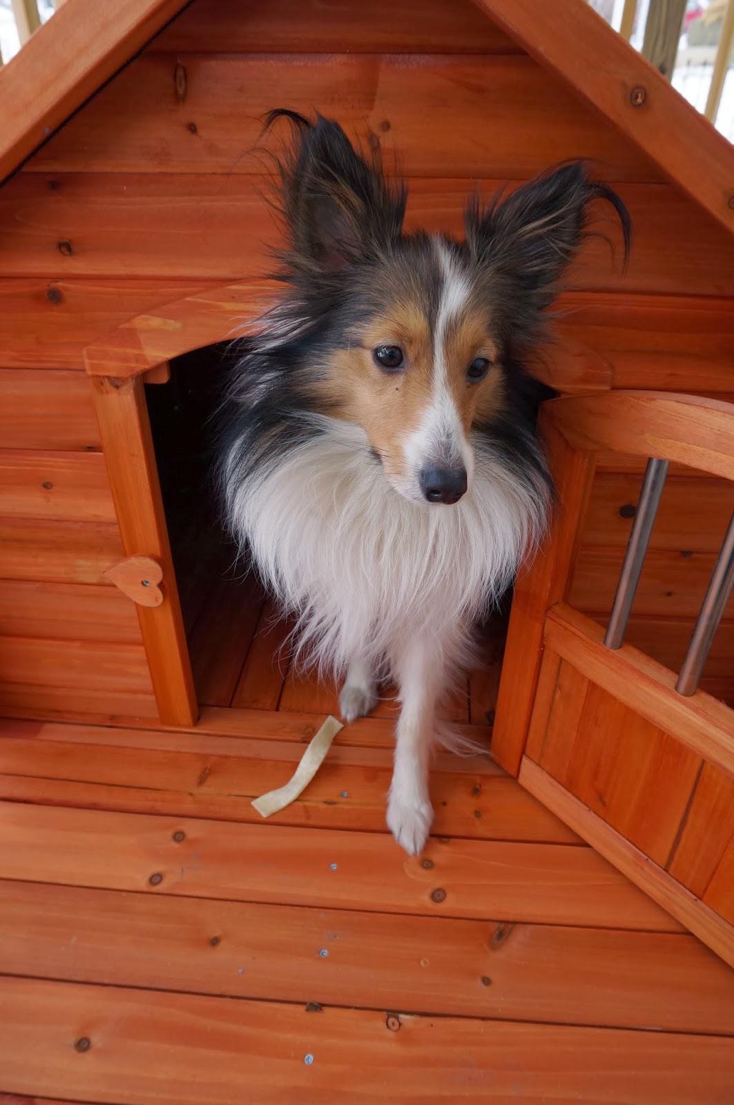 Vortex Porch Pups Large Dog House