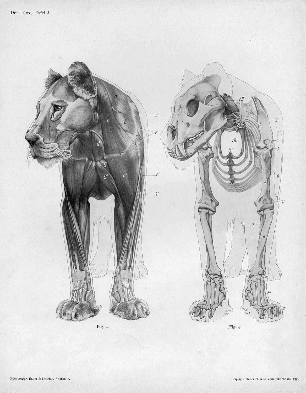 Imágenes gratis de Animales FreeJPG - imagenes de animales gratis