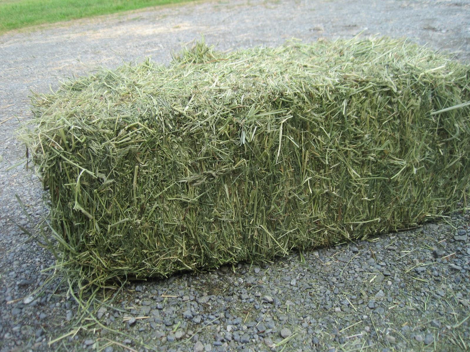http://2.bp.blogspot.com/-IQgcuq1qFnA/UKCFvhfvmMI/AAAAAAAAALg/1uE73cWyw3k/s1600/alf+grass+and+orchard+2011+006.JPG