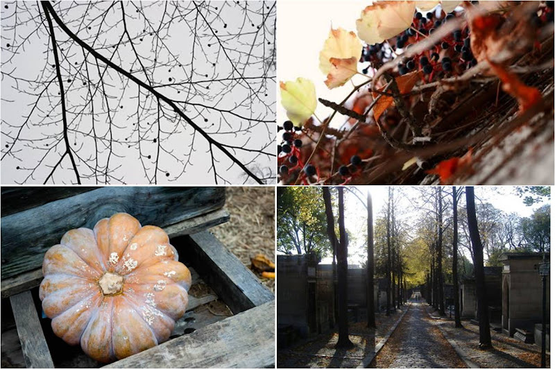 automne2011