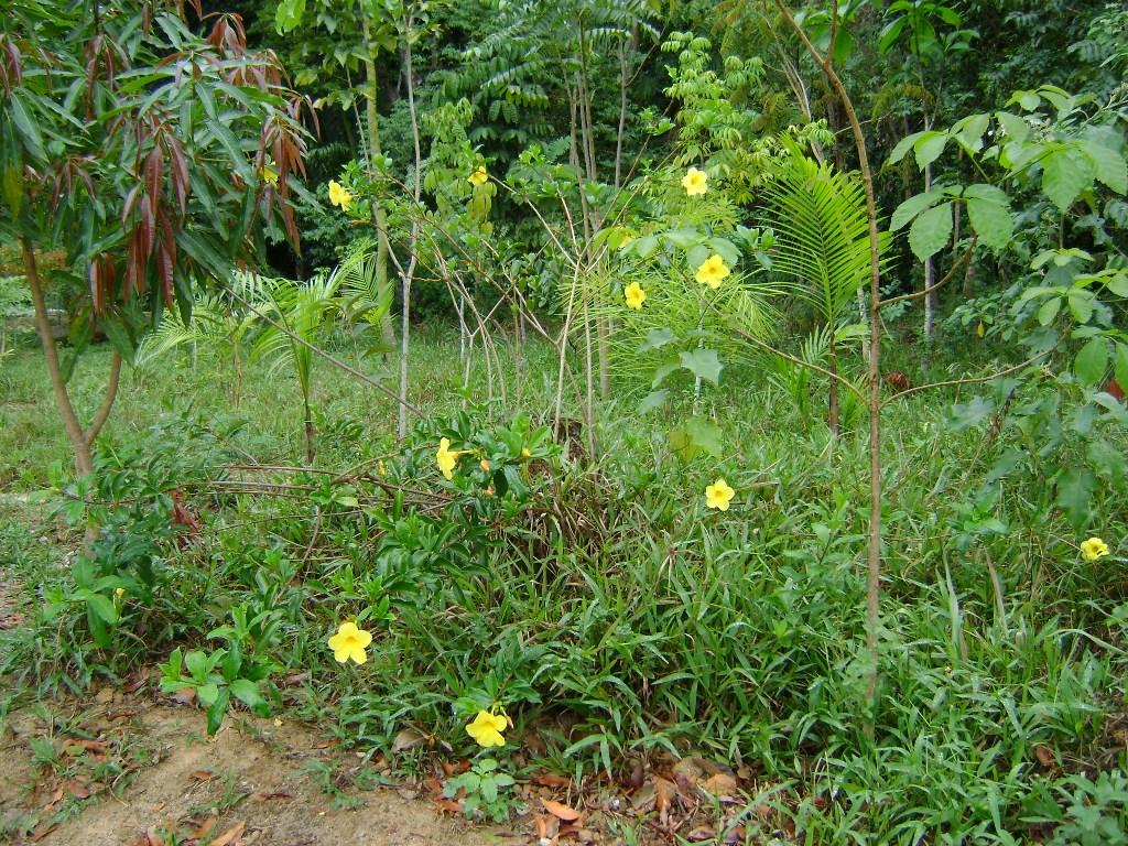 112. fotos jardim botanico recife:JARDINS DE AGHARTA: Jardim Botânico  #729B30 1024 768