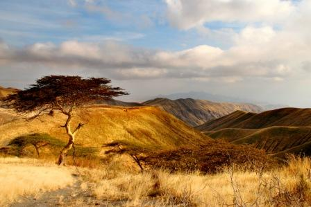 Highland-bushveld