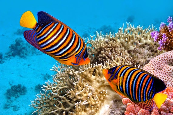 Beautiful Colorful Coral Reefs And Fish Arrecifes amenazados e...