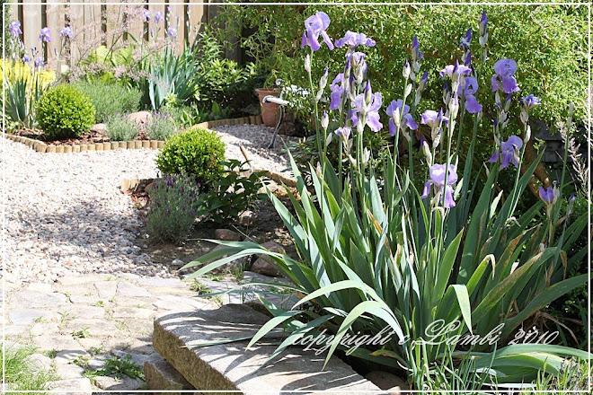 Nasz ogród...