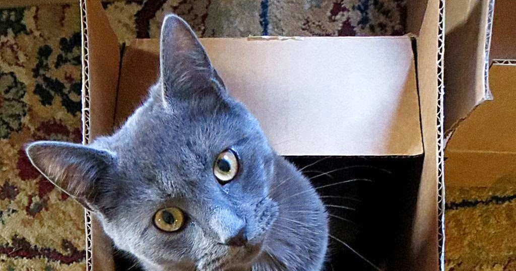 signs of tapeworm in cats
