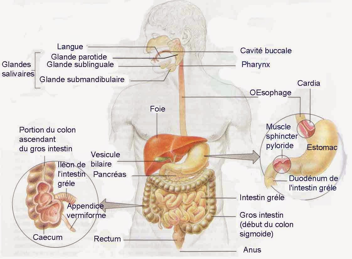 Flatulence: Symptoms and Treatment 12