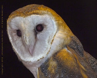 Barn Owl Sounds - All ...