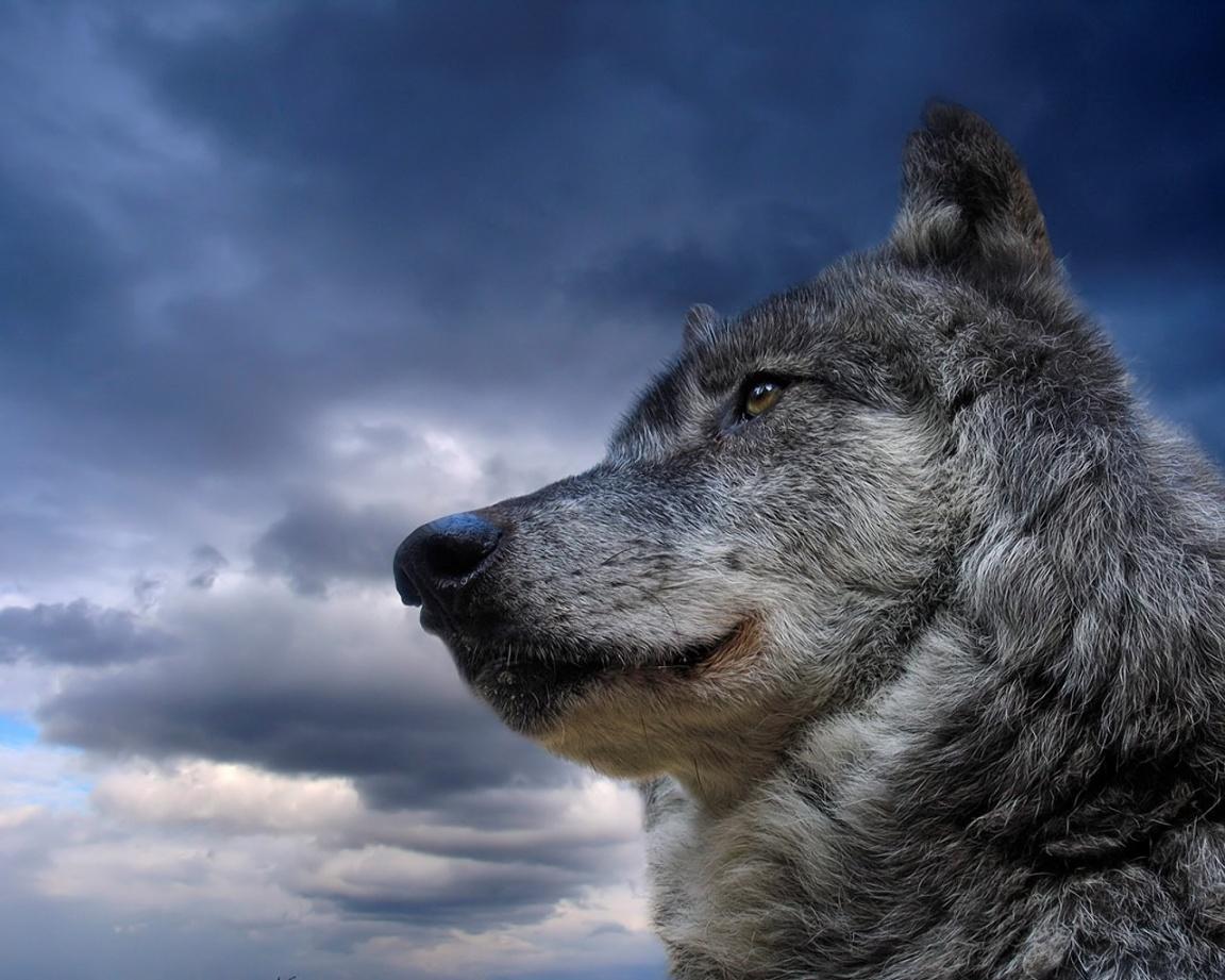 http://2.bp.blogspot.com/-ISZtT2IZVdQ/TegRqu8BrmI/AAAAAAAABHw/XzPUF4v9w_o/s1600/portrait-of-a-wolf-wallpapers_13151_1152x864.jpg