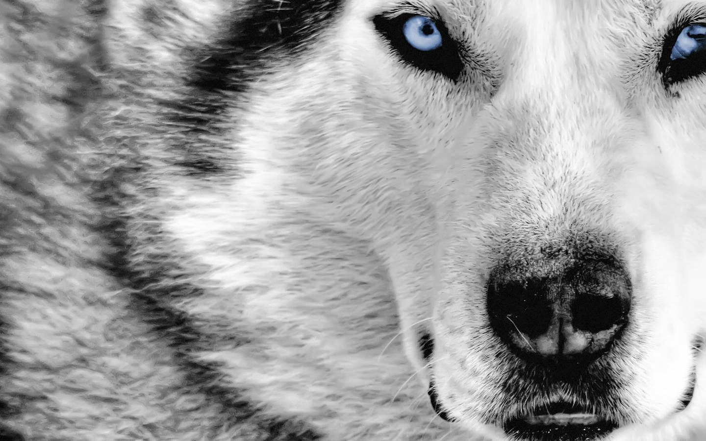 Pack Of Wolves ... Wording