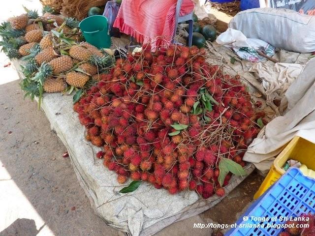 voyageurs qui aiment le sri lanka