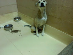 "2/23/11"" Jackson, GA - PLEASE POST! - SWEET EMACIATED BABY NEEDS A HOME A foster A rescue!! - Her t"