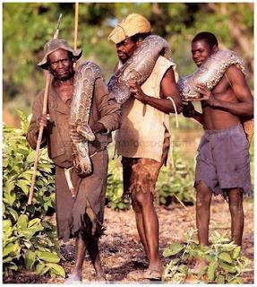 caçar de cobra