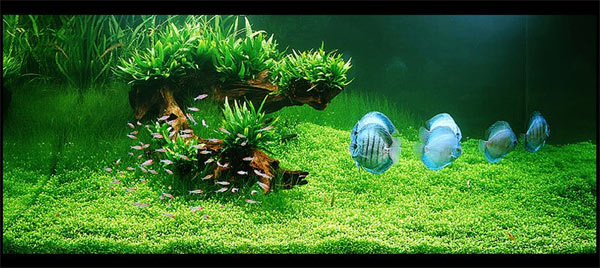 Basic Fertilizer Can Be Obtained At Toko2 Aquascape And Aquarium Stores  Such As Dannerle Expensive Brands With Excellent Quality.