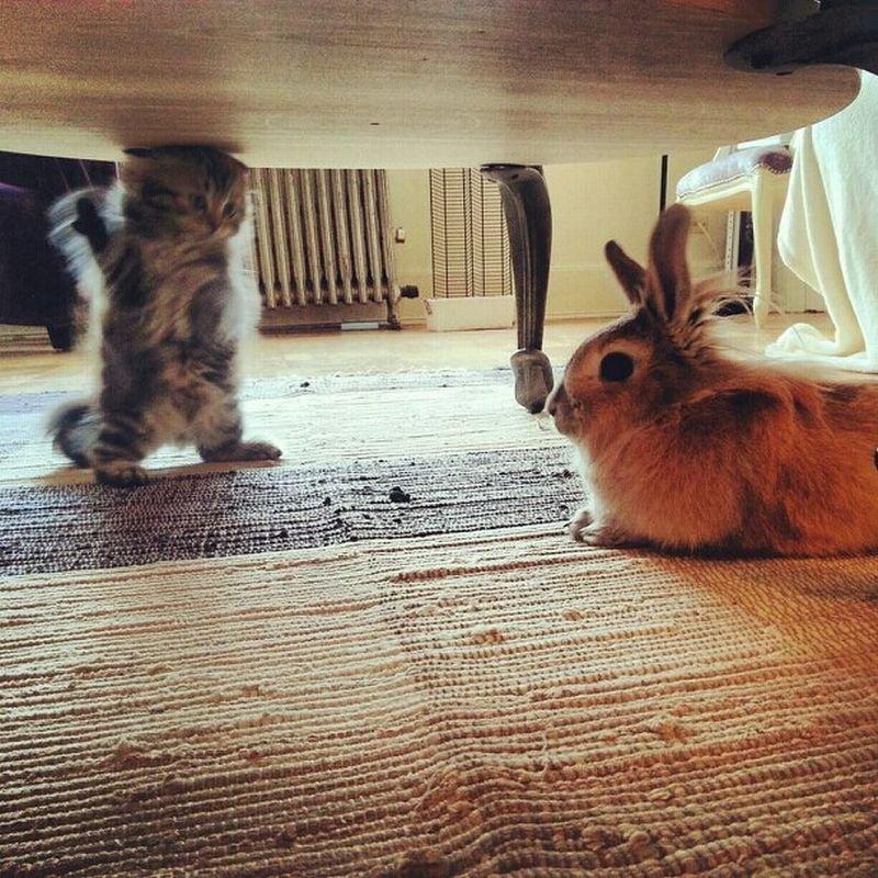 Котенок и кролик