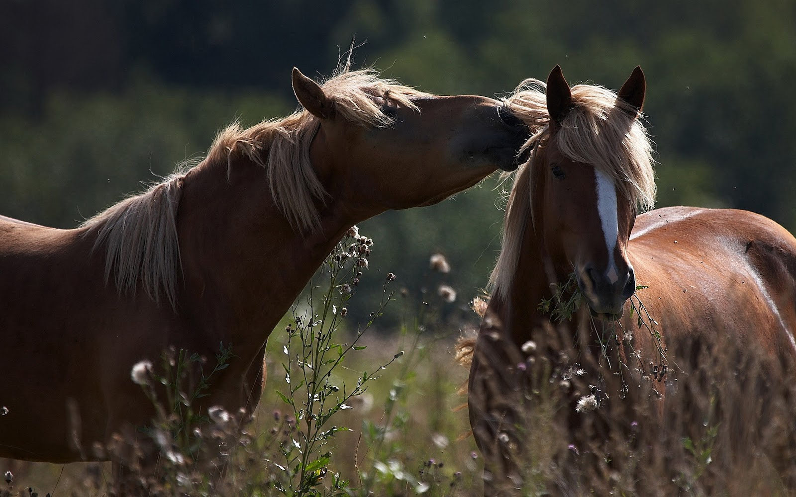 http://2.bp.blogspot.com/-ITkZVFtgKao/UCJNlpH8jWI/AAAAAAAAAE0/w8PTXU9VUC8/s1600/horse-wallpaper-with-two-horses-cudling.jpg