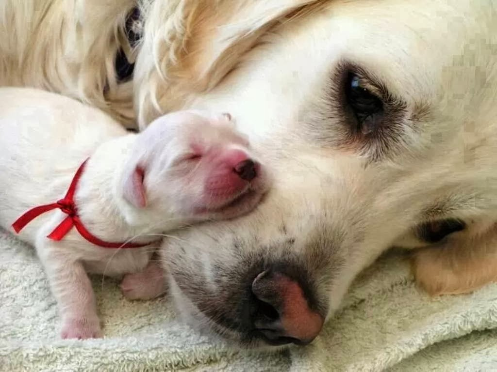 Cute dogs - part 11 (50 pics), dog and her newborn puppy