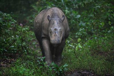 Rhino Species