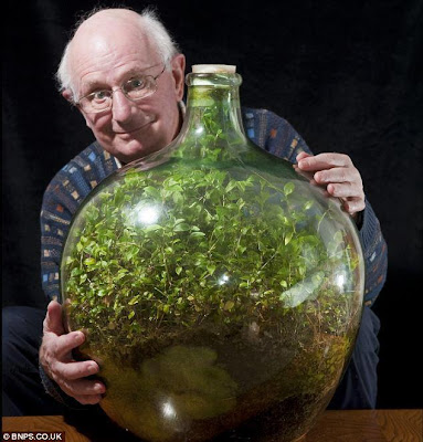 FOR THE LAST 40 YEARS, THIS BOTTLE GARDEN HAS BEEN COMPLETELY SEALED FROM THE OUTSIDE WORLD