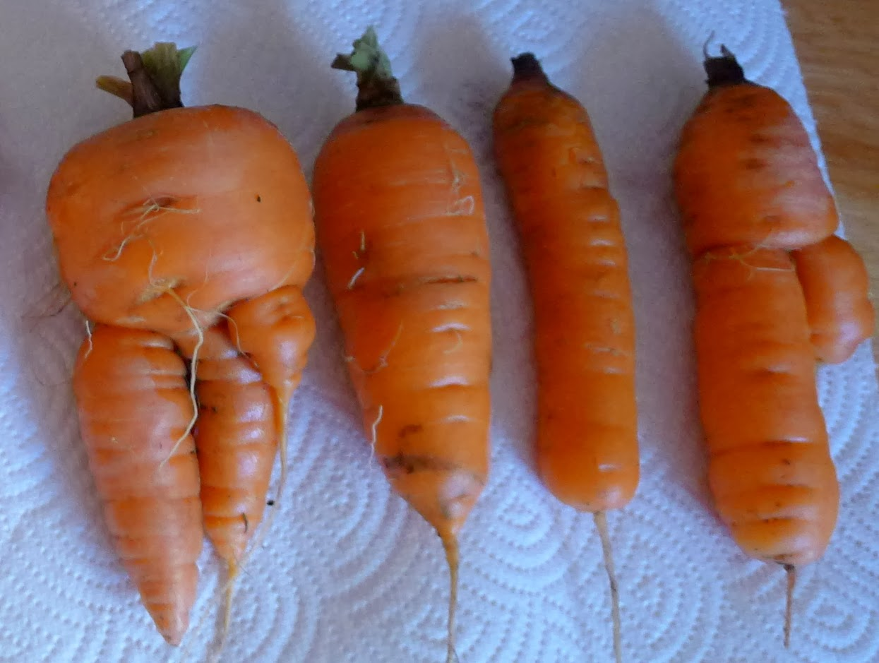 ugly vegetables are nutritious, urban farming