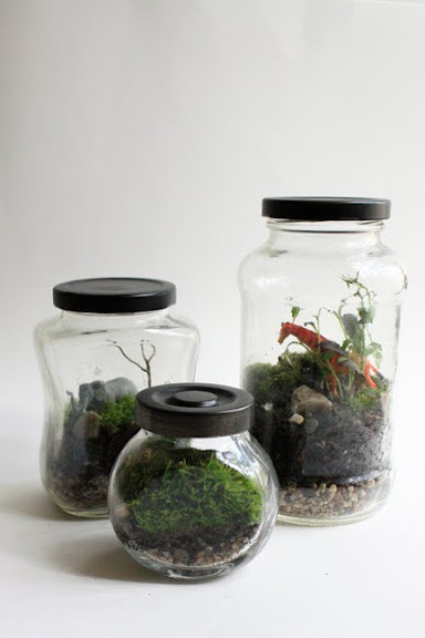 MG 9330 Create Your Own Terrarium