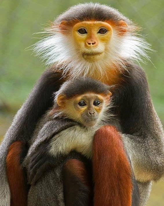 Małpki :)