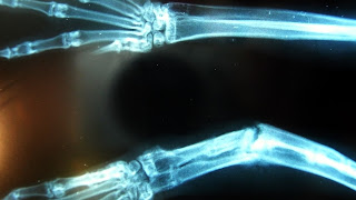 radiologia conejos
