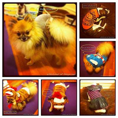 JR & BabyPom's Halloween costumes, pet costumes