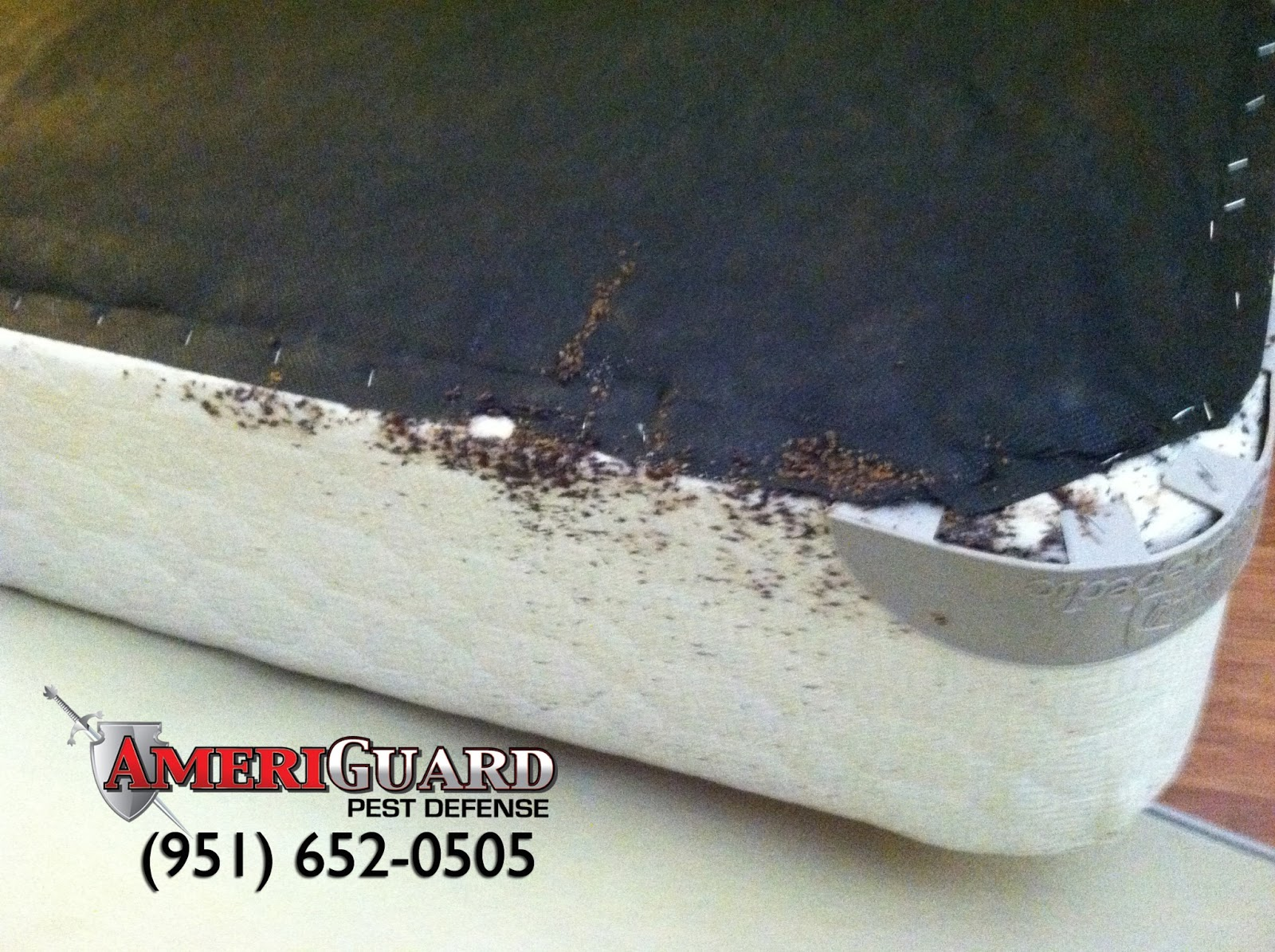 Pest Termite Gopher control in Temecula Murrieta Hemet