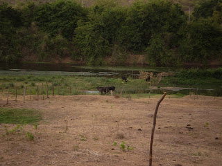 Fotos da Lagoa de estabilização do esgoto do município de Icó - Ce (jan./12). Fonte: Acervo do professor Anselmo