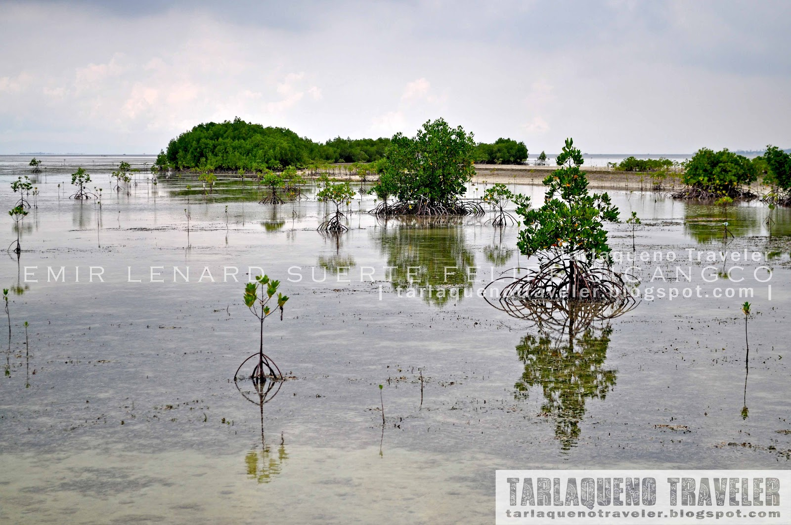 Mangroves at Olango Island Wildlife Sanctuary