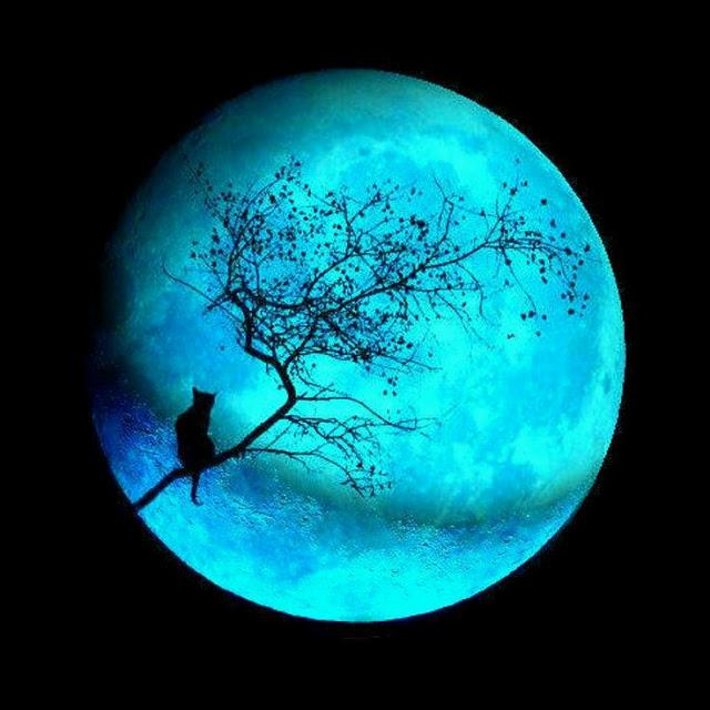 Soy Luna Sanadora Azul Ahf6MCbff9