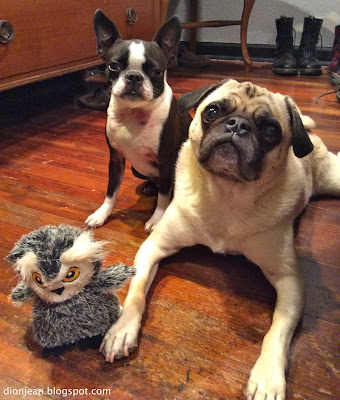 Liam and Sinead and the owl dog toy