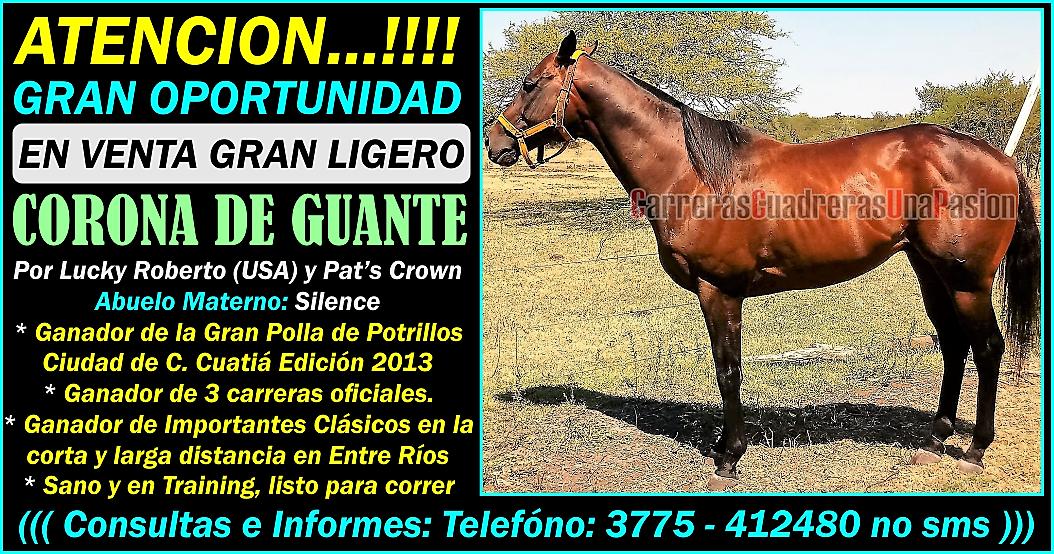 CORONA DE GUANTE - 07.03.2018