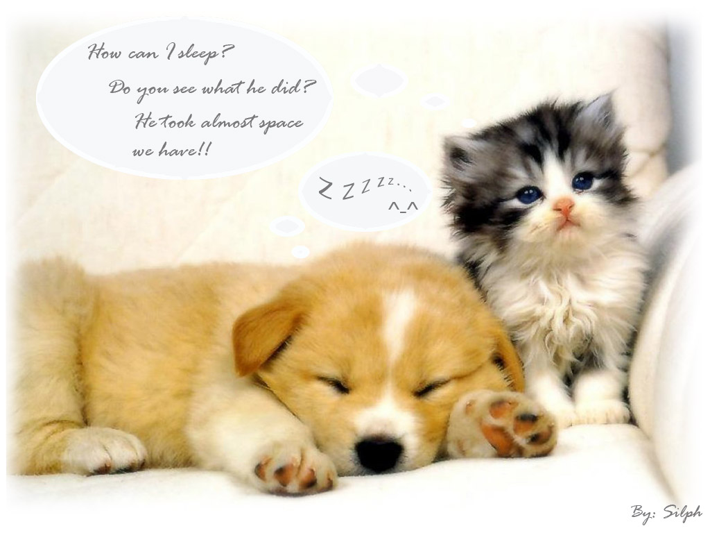 All Animals Are So Beautiful Here You Can Animal Wallpapers These Cute And Loving