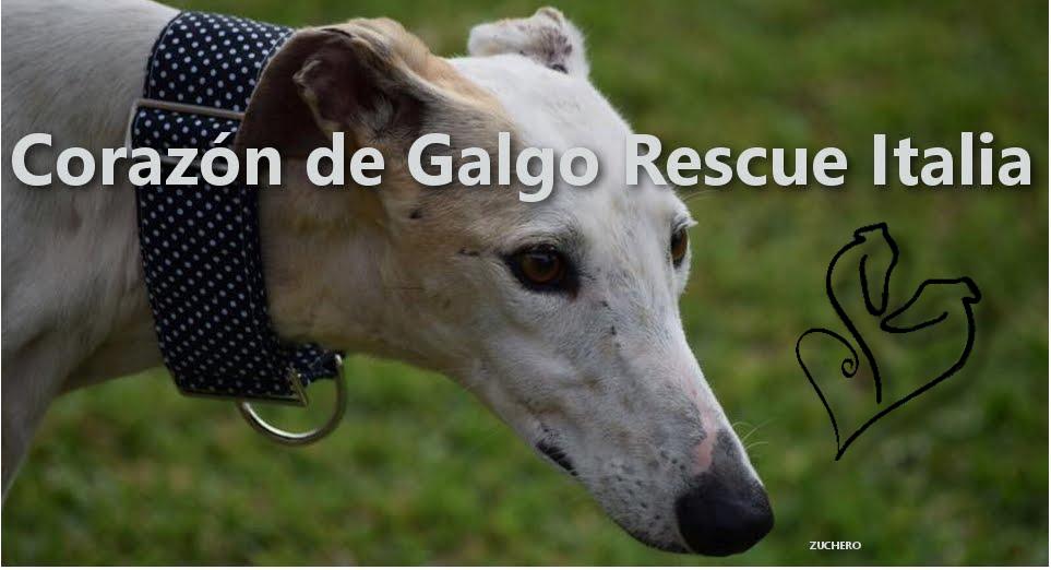 Corazon de Galgo Rescue Italia, adotta un galgo!! Associazione no profit