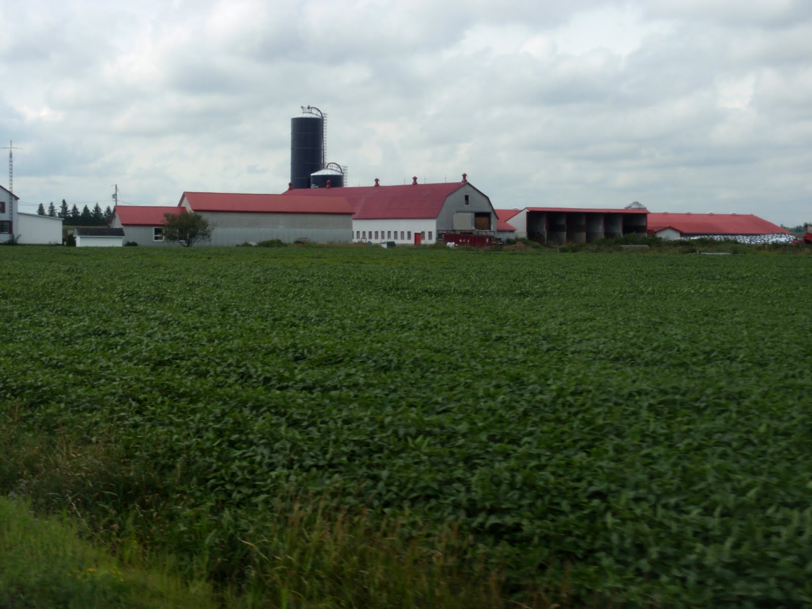 Dairy farm close to Montreal