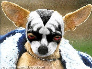 Dog rock star