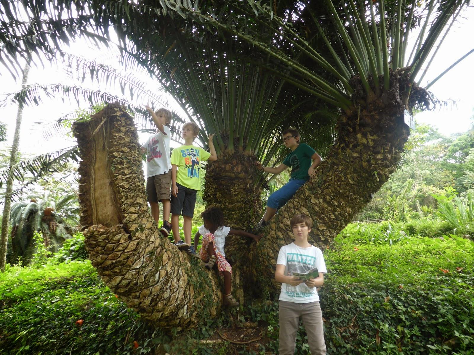 """Résultat de recherche d'images pour """"le jardin botanique de kisantu"""""""