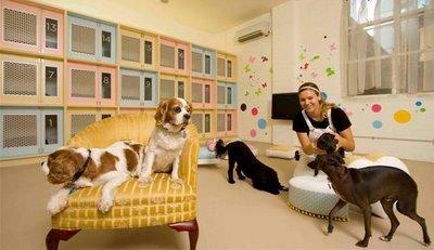 hablemos de negocios idea de negocio hoteles para mascotas On diseño de un hotel para perros