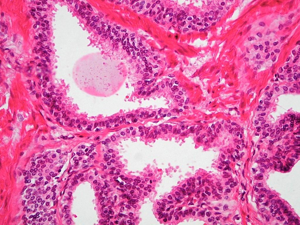 Biologia Humana Wallpaper Genital